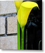 yellow Lily. Metal Print