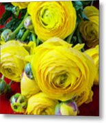 Yellow Ranunculus Metal Print