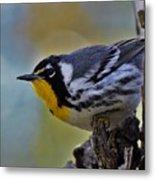 Yellow Throat Warbler Metal Print