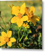 Yellow Wildflowers In A Field Metal Print
