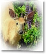 Young Buck Among The Lupin Metal Print