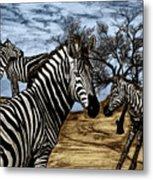 Zebra Outback  Metal Print