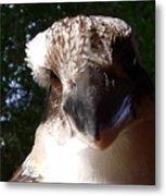 Australia - Kookaburra Up Close Metal Print
