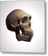 Homo Erectus Metal Print