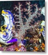 Sea Squirts Metal Print by Georgette Douwma