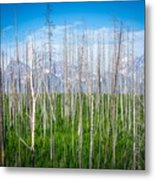 Vast Scenic Montana State Landscapes And Nature Metal Print