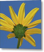 Wild Sunflower Stony Brook New York  Metal Print