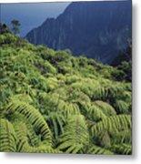 100139 Amaumau Ferns Hawaii Metal Print