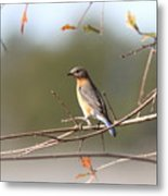 105319 - Bluebird Metal Print