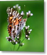 1074- Butterfly Metal Print