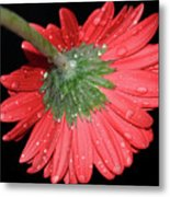 Red Gerber Metal Print