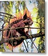 11451 Red Squirrel Sketch Metal Print
