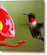 1164 - Hummingbird Metal Print