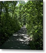 1174, Forest Path Metal Print