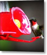 1175 - Hummingbird Metal Print