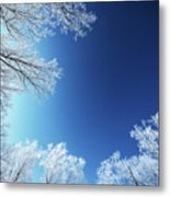 Amazing Landscape With Frozen Snow Covered Trees At Sunrise   Metal Print