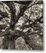 Angel Oak Live Oak Tree Metal Print