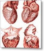 Heart, Anatomical Illustration, 1814 Metal Print