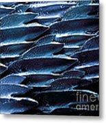 Shark Skin, Sem Metal Print