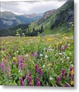 Wildflower Meadow Metal Print by Bob Gibbons