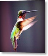 1257-006 - Ruby-throated Hummingbird Metal Print