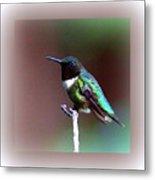 1281 - Hummingbird Metal Print