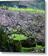 Blossoming Peach Flowers In Spring Metal Print