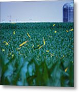 1306 - Fireflies - Lightning Bugs Over Corn Metal Print