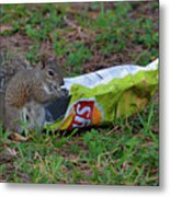 14- Chip Lovin' Squirrel Metal Print