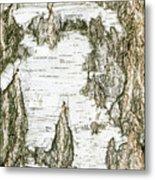 Detail Of Brich Bark Texture Metal Print