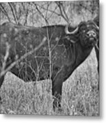 South Africa Metal Print