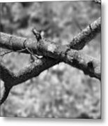 Bare Tree Branches In Early Spring Metal Print