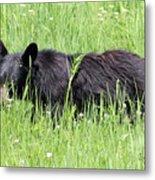 American Black Bear Yellowstone Usa Metal Print