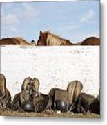 162669 Horse Walls Animals National Geographic Metal Print