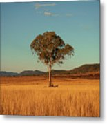 Country Agricultural And Farming Field. Metal Print