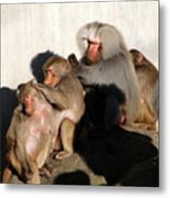 Hellabrunn Zoo - Munich, Germany Metal Print