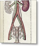 The Science Of Human Anatomy Metal Print