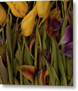 Tulips Wilting Metal Print