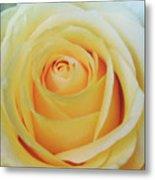 18 Yellow Roses Metal Print
