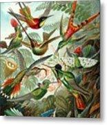 1899 Hummingbird Species Art Forms Of Nature Print Metal Print