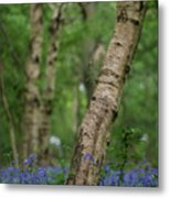 Shallow Depth Of Field Landscape Of Vibrant Bluebell Woods In Sp Metal Print