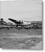 1944 B-24 H Plane In Field W/ Sheeep Pantanella Airfield Italy Metal Print
