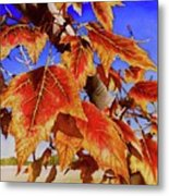 #199 Red Maple Metal Print