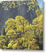 1m6610 Middle Cathedral Rock In Autumn Metal Print