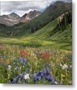 Alpine Flowers In Rustler's Gulch, Usa Metal Print