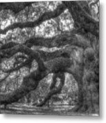 Angel Oak Tree Charleston Sc Metal Print