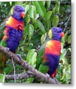 Australia - Two Brightly Coloured Lorikeets Metal Print