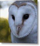 Australian Barn Owl Metal Print
