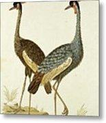 Balearica Regulorum Grey Crowned Crane, Robert Jacob Gordon, 1777 - 1786 Metal Print