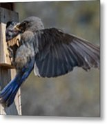 Beak To Beak Metal Print